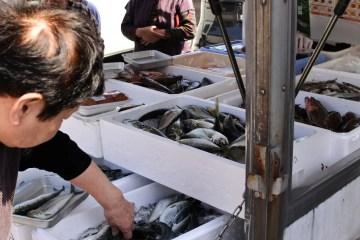 魚介類 移動販売