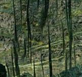 Foliage17