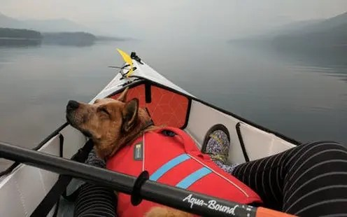 5 Best Kayak For Dogs – Share your Hobby with your Pet!