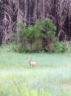 Beautiful Stag in Valley
