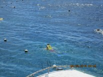Swimming Great Barrier Reef