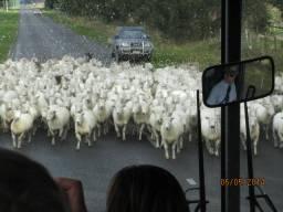 New Zealand rush hour
