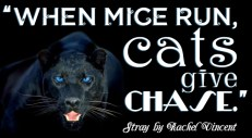 """""""When mice run, cats give chase."""" Stray, Rachel Vincent"""