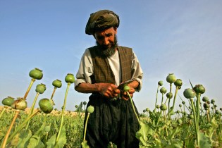 FILE PHOTO: An Afghan farmer collects raw opium from poppies, in a village outside Balkh province, about 500 km (310 miles) north of [Kabul] May 6, 2006. The illegal narcotics trade dominates Afghanistan's economy, accounting for 60 percent of its gross domestic product and 87 percent of the world's supply. [Heroin and morphine are derived from opium, which comes from poppies.]