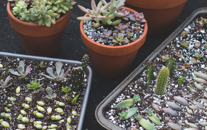 Propagating Succulents 101 - THE DAINTY SQUID