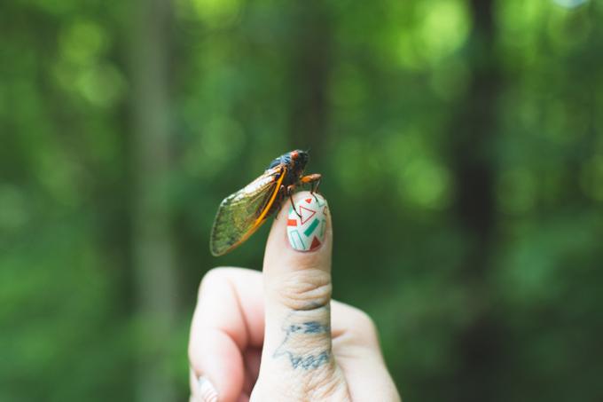 ohio, cicada, magicicada