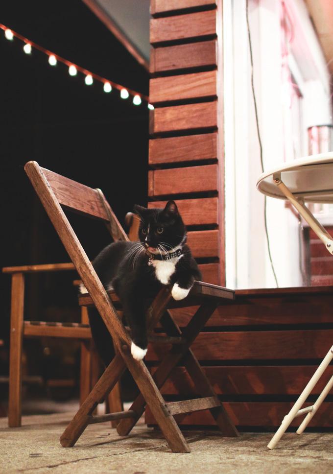 mason's creamery, cleveland, stray cat