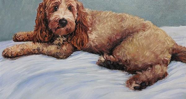 Animal Portraits - Dog Portrait In Oil - Commission of a Spoodle portrait