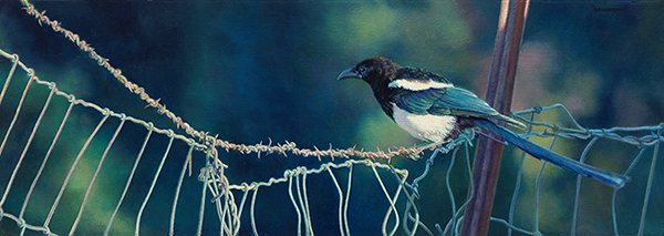 """Young Maggie Blue"" (Magpie) ©Kay Witherspoon, 10"" x 28"", oil on linen (SOLD), featured and sold in the Leigh Yawkey Woodson Birds In Art, canvas giclée prints available"