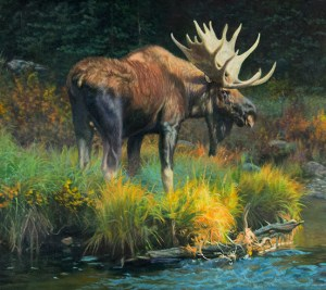 """""""Narcissus"""" by © K Witherspoon depicting Moose wildlife art"""