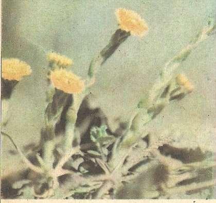 Жизнь растений в природе весной Книга для чтения по