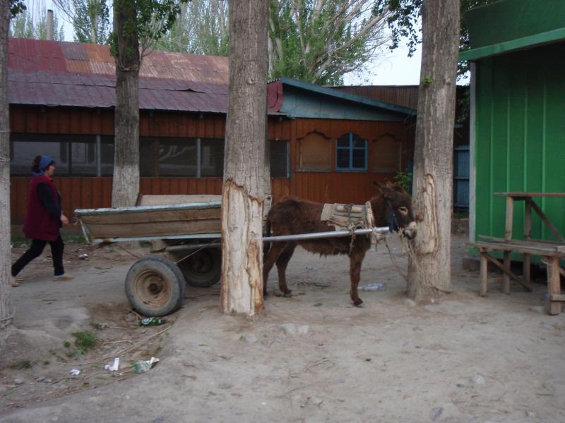burro-and-cart