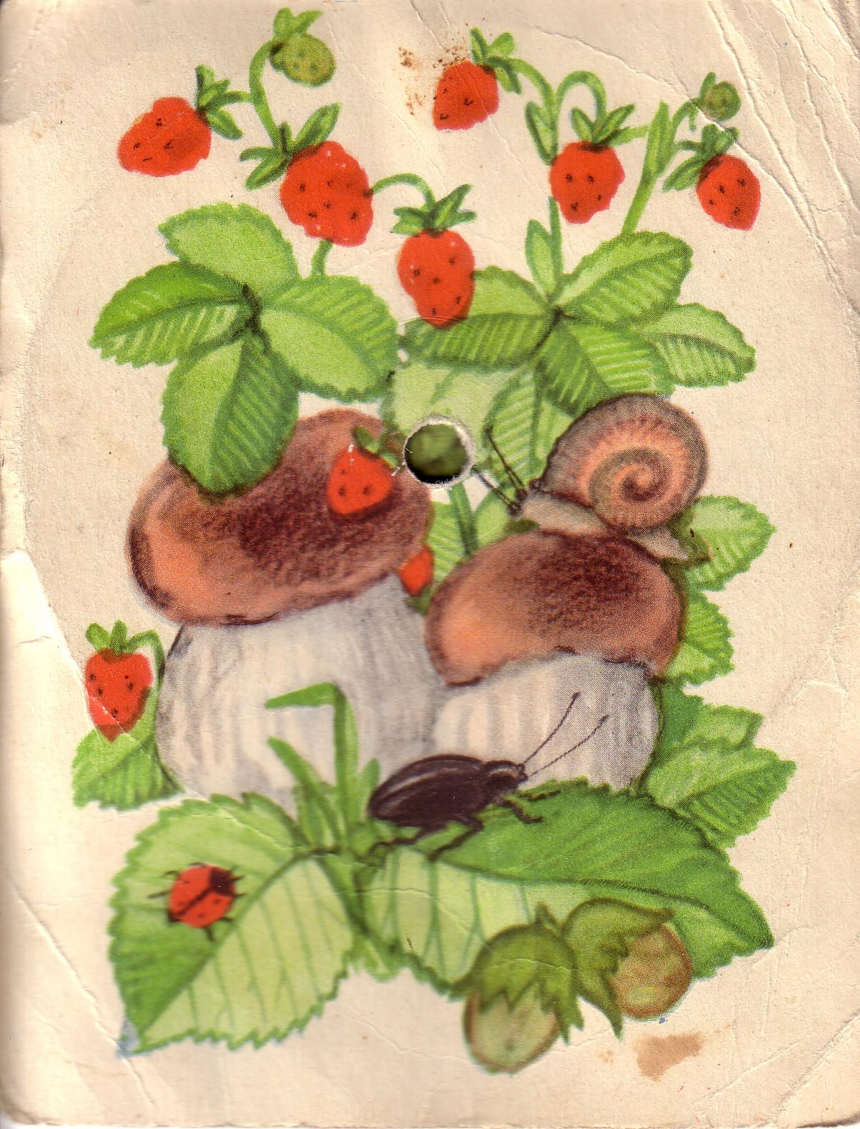 mushrooms and strawberries