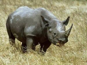Kaziranga Rhino, Kaziranga Tour Operator, Assam Rhino Kaziranga