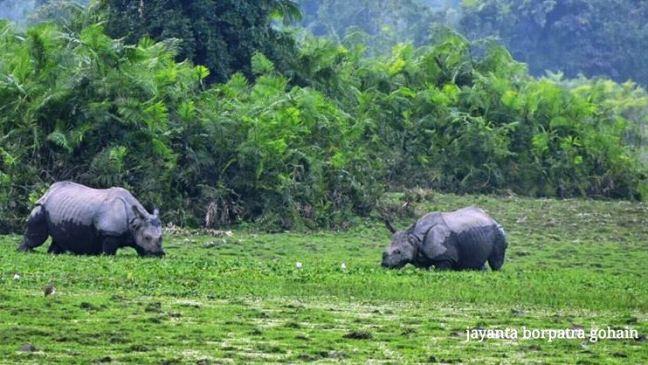 Kaziranga National Park, Visit Kaziranga Majuli Sivasagar, Kaziranga Hotels Resorts