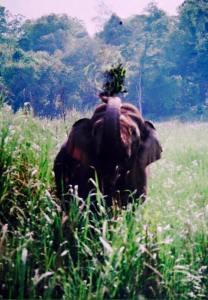 Elephants Kaziranga, Kaziranga National Park Rhinos, Assam Kaziranga Safari