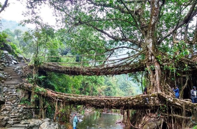 Living Root Bridge, Nongriat Village, Kaziranga, Double Decker Root Bridge