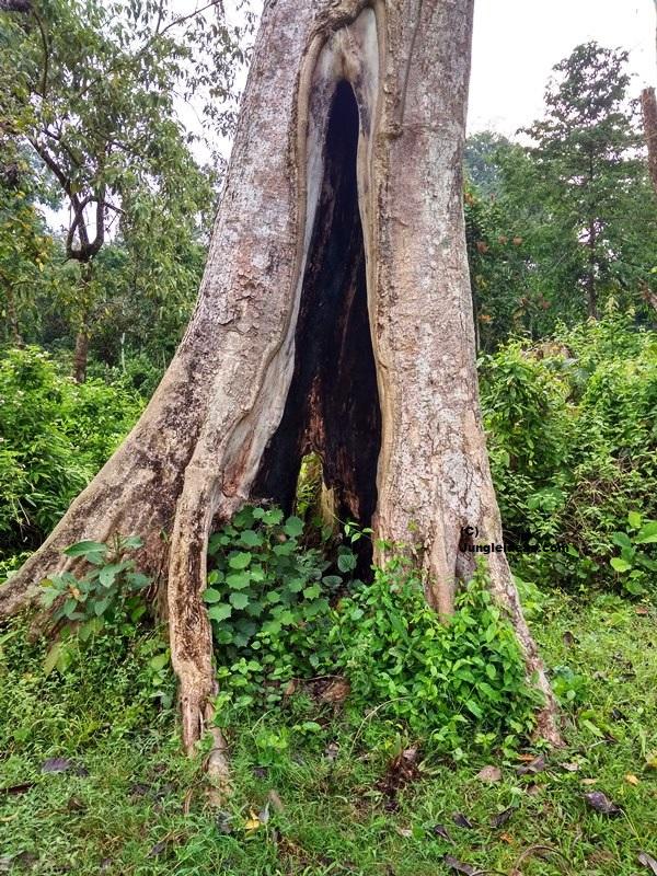 Nameri National Park, Nameri Birds, Nameri Trekking, Kaziranga National Park