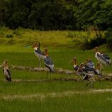 Manas National Park, Manas Assam, Manas Tigers, Kaziranga National Park