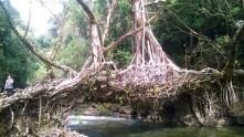 Kaziranga National Park, North East India, Assam, Meghalaya, Majuli, Guwhati