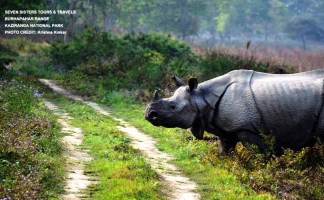 Kaziranga National Park, Backpacking in North East India, Solo Travel