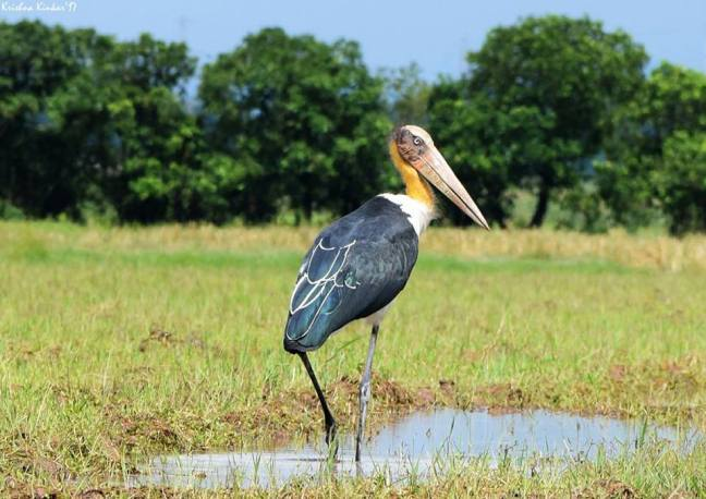 Kaziranga Photography Tour, Assam Birdwatching Tour, Kaziranga National Park
