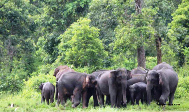 Wildlife Sanctuaries Assam, Kaziranga National Park, Assam Wildlife Sanctuary