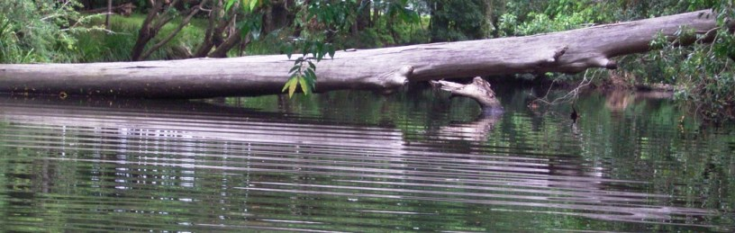 cropped-06-02-10-logs-reflections-nth-haven-river.jpg