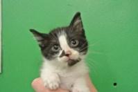 N5-Kitty-89275
