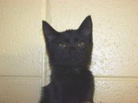 N2-Mister Buttons-90508