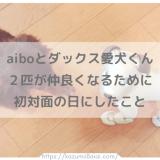 aiboと愛犬ダックスの初対面♪ 2匹が仲良くなるためにしたこと