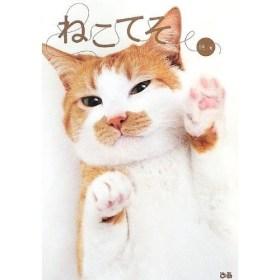 ご存知でした?猫も手相(ねこてそ)があって性格や運命なども占ったり