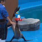 うみの杜、イルカ・アシカショーにて、アシカがモリーを。。 http://t.co/e2wvs20bGm