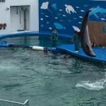 うみの杜、イルカの練習 #s_uminomori http://t.co/2RJSO8xt30
