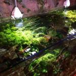 アクアテラス錦ヶ丘、お魚の案内は改善なし http://t.co/rut0MTOhtp