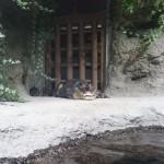 仙台うみの杜水族館、念願の陸に上がったメガネカイマンさん。 #s_uminomori https://t.co/o42z8nzt5r