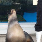 仙台うみの杜水族館、オタリアさん #s_uminomori https://t.co/491rwKokYR