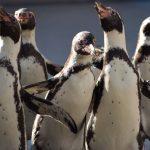 仙台うみの杜水族館、ペンギンスノーパレード。一応雪降ったけど、日差しがあって温かい #s_uminomori https://t.co/5LNBFo4jfK