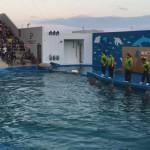 仙台うみの杜水族館、イルカショー #s_uminomori https://t.co/Cc8ImkwHoA