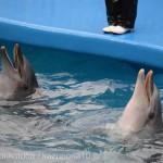 仙台うみの杜水族館、イルカさん #s_uminomori https://t.co/JOgJxcI4e1