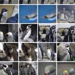 Googleフォトで自動認識された鳥。便利なようで使いにくい https://t.co/sjnDjV80b0
