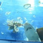 仙台うみの杜水族館、ホヤ水槽のご飯 #s_uminomori https://t.co/yvy4lEHu4p