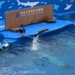 仙台うみの杜水族館、アシカジャンプ #s_uminomori https://t.co/aqUZignnrS
