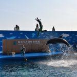 仙台うみの杜水族館、技が成功して喜ぶトレーナー2人が良い感じ #s_uminomori https://t.co/bJIDhidvUC