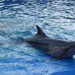 仙台うみの杜水族館、イルカさん #s_uminomori https://t.co/rjIqPQXDpE