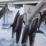 仙台うみの杜水族館、イルカショー。6頭ジャンプ #s_uminomori https://t.co/8qnXi4ZWLZ