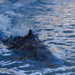 仙台うみの杜水族館、速く泳ぐイルカさん https://t.co/jNqeutByz4