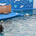 仙台うみの杜水族館、バンドウイルカホイホイ https://t.co/QjAirEjw6D