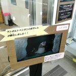 仙台うみの杜水族館、フンボルトペンギンの赤ちゃんが孵化しました https://t.co/n6EfSXY88O