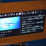 仙台うみの杜水族館、ヨシキリザメを展示しています https://t.co/bZkbQGSLbw